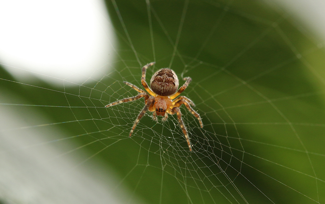 spider in web laying an seo trap